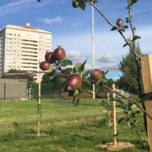 Coatbridge Community Orchard