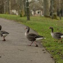 Consultation on Strathclyde Park